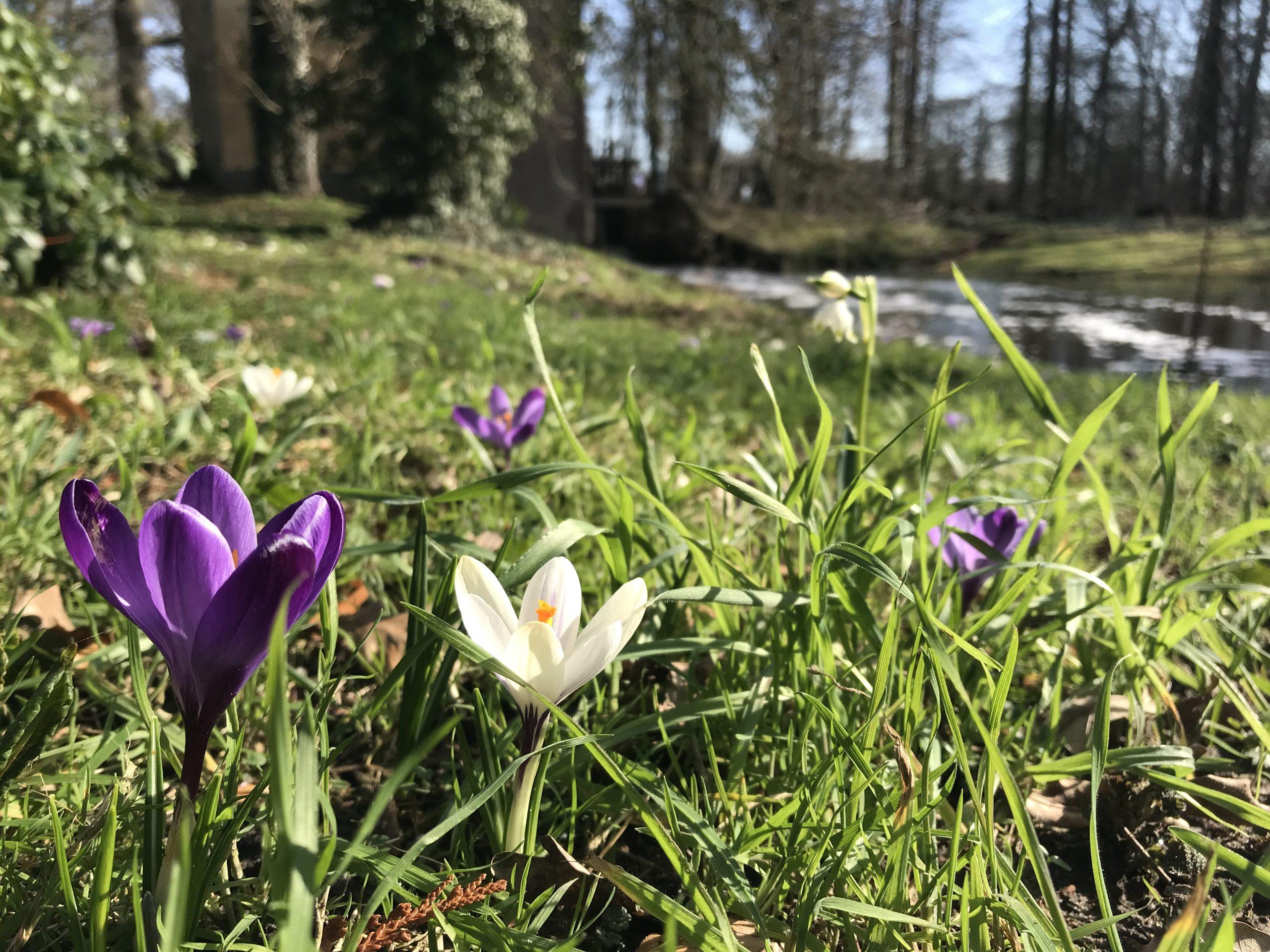 Voorjaars schotel – vrijdag